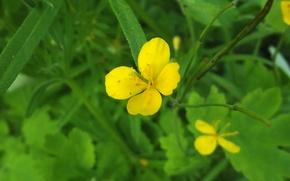 Картинка Цветы, Природа, Жовтий