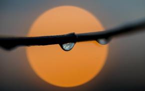 Картинка fireball, sun, drops, branch