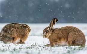 Картинка зима, кролики, двое