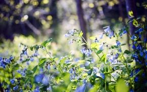 Картинка лес, лето, цветы, природа