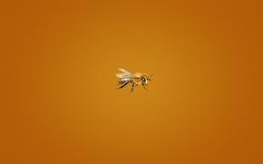 Обои минимализм, оранжевый фон, мелкая, пчела, bee, пчелка