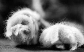 Картинка животное, лапки, кот. макро