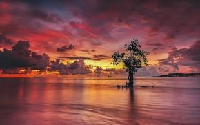Обои дерево, небо, озеро, зарево, облака