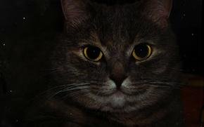 Картинка глаза, макро, Кошка, жёлтые