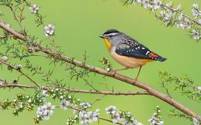 Обои цветы, перья, ветка, птица, клюв, листья