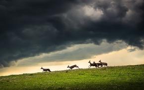 Картинка поле, небо, олени