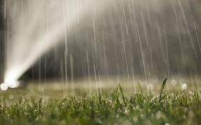 Обои вода, газон, капли, роса, трава