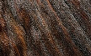 Картинка текстура, мех, animal texture, фон на рабочий