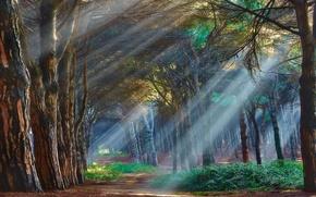 Картинка лес, лучи, деревья, туман, обои от lolita777
