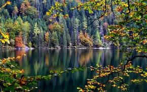 Обои склон, лес, деревья, река, осень, ветка