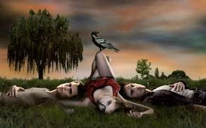 Обои дерево, трава, грач, трое, дневники вампира