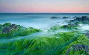 Картинка водоросли, камни, океан, рассвет