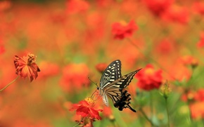 Обои лето, цветы, бабочка
