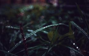 Картинка зелень, осень, трава, капли, Россия, macro, dobraatebe