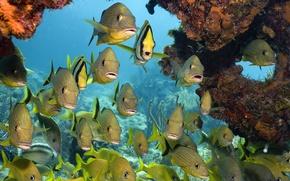 Обои море, рыбки, кораллы, Подводный мир, тропические рыбы