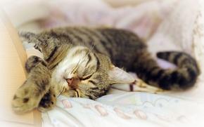Обои кот, отдых, сон, моська
