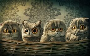 Картинка кошка, сова, корзина, арт