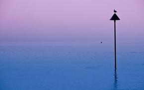 Картинка ночь, озеро, птица