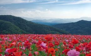 Картинка цветы, горы, луг, природа, маки, деревья, пейзаж