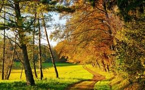 Обои осень, лес, деревья, желтые, солнце
