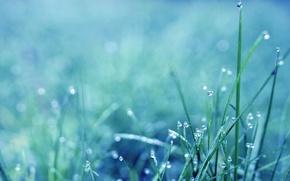 Картинка трава, роса, утро