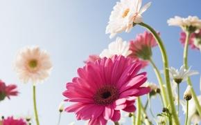 Обои цветок, небо, солнце