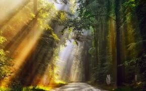 Обои нидерланды, утро, лето, июнь, лес, свет