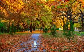 Картинка осень, листья, деревья, парк, Nature, аллея, листопад, собачка, тропинка, trees, dog, park, autumn, leaves, path, …