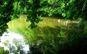 Обои деревья, отражение, водоём, листья