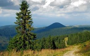 Картинка дорога, лес, небо, облака, деревья, горы, холмы, ель
