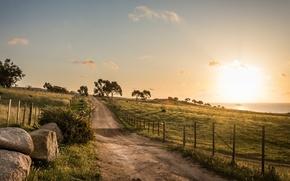 Обои дорога, деревья, поля, утро