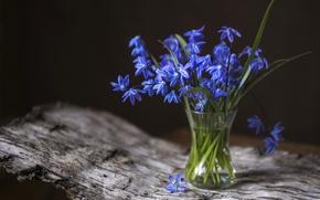 Картинка весна, первоцвет, пролеска