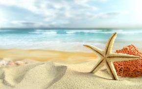 Обои море, пляж, лето, небо, облака, природа, beach, sky, sea, nature, clouds, sand, shells, starfish