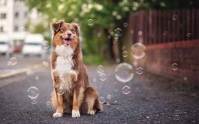 Картинка взгляд, пузыри, друг, собака