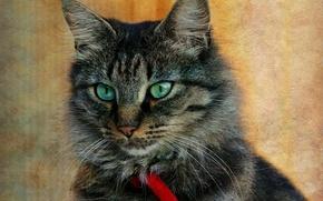Обои кошка, кот, серый, фон, портрет, текстура, ошейник, полосатый