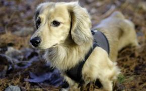 Картинка фон, собака, прогулка