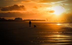 Картинка море, человек, собака, прогулка