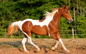 Картинка Лошадь, земля, бег