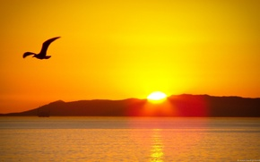 Картинка море, солнце, птица, sunset In mountains