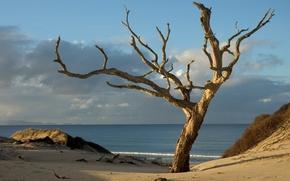 Обои дерево, пляж, песок, вода, небо, облака