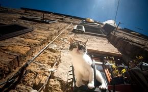 Обои кошка, кот, дом, окно, наблюдение