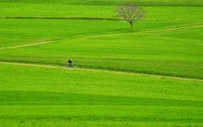 Обои farmland, way, green, grass, path, rider, tree, bike, fields, pathway, man, countryside
