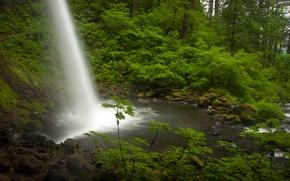 Картинка лес, водопад, поток, Орегон, Oregon, Columbia River, река Колумбия, Ponytail Falls