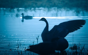 Картинка вода, природа, птица, крылья, клюв