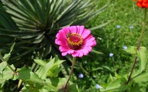 Картинка лето, макро, насекомые, природа, Цветы