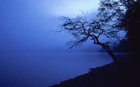 Обои синий, дерево, берег