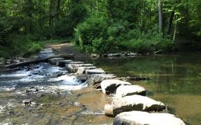 Картинка лес, природа, река, тропа