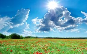 Картинка фото, Солнце, Небо, Природа, Облака, Поле, Лето, Маки, Пейзаж