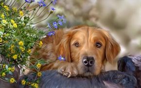 Картинка цветы, собака, текстура