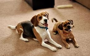 Картинка собаки, окрас, порода